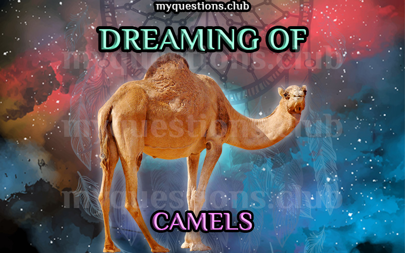 DREAMING OF CAMELS