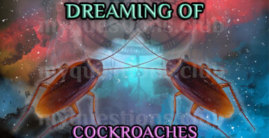 DREAMING OF COCKROACHES