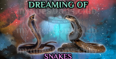 DREAMING OF SNAKES