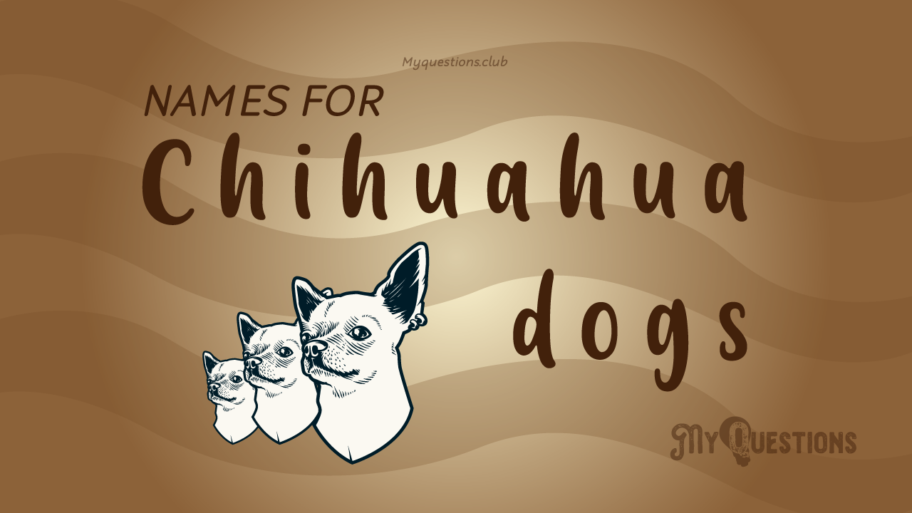 NAMES FOR CHIHUAHUA DOGS