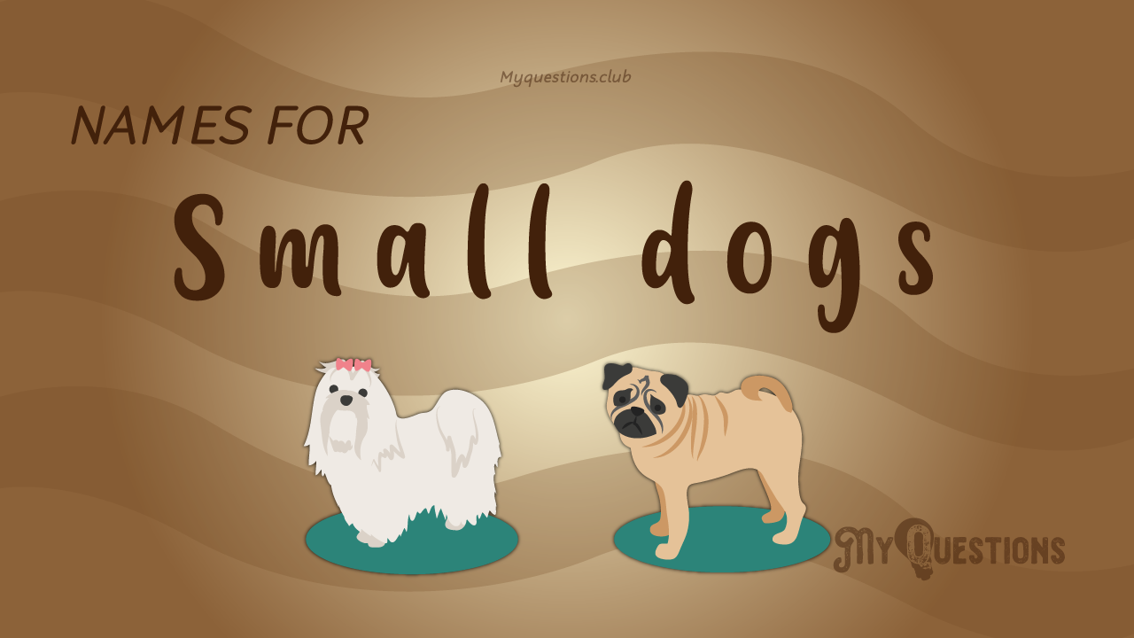 NAMES FOR SMALL DOGS