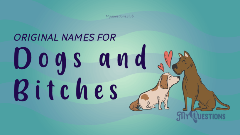 ORIGINAL NAMES FOR DOGS AND BITCHES