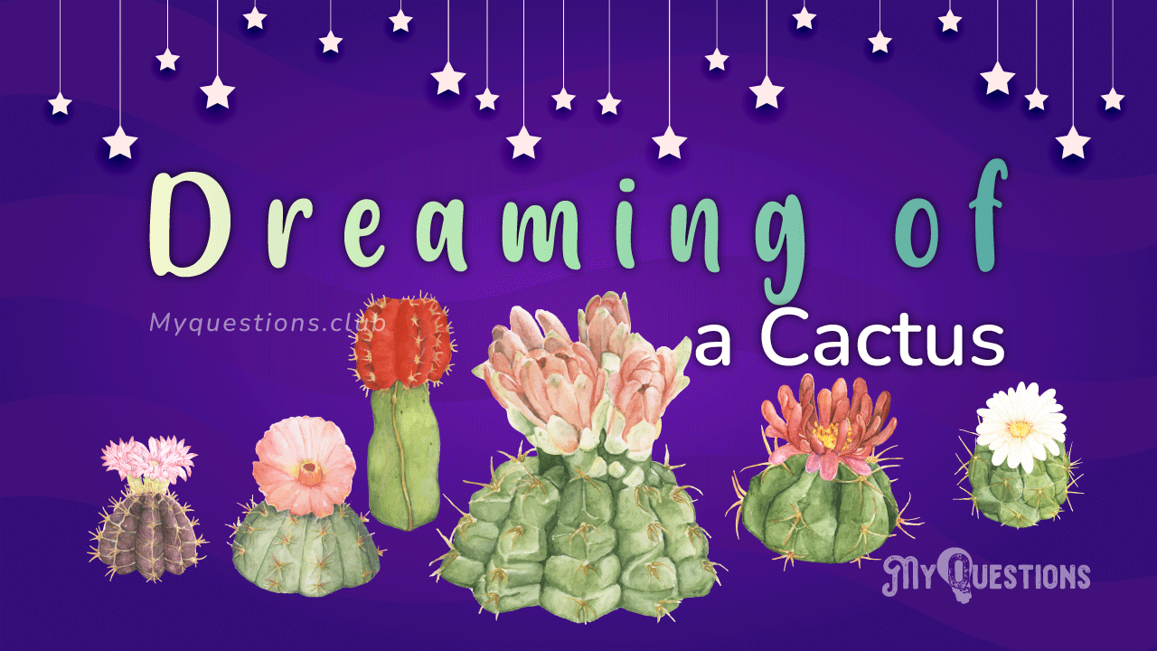 DREAMING OF A CACTUS