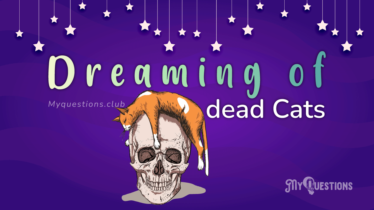 DREAMING OF DEAD CATS