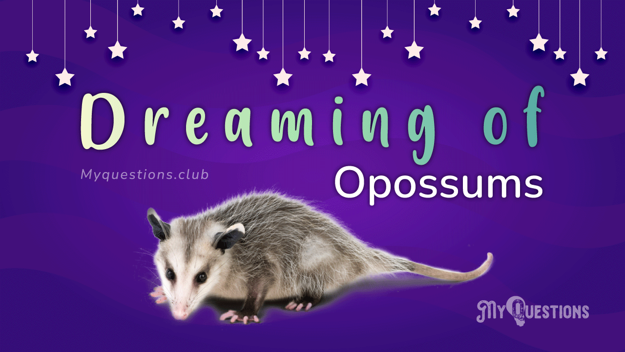 DREAMING OF OPOSSUMS
