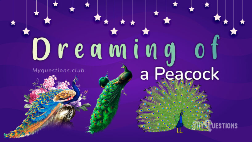 DREAMING OF A PEACOCK