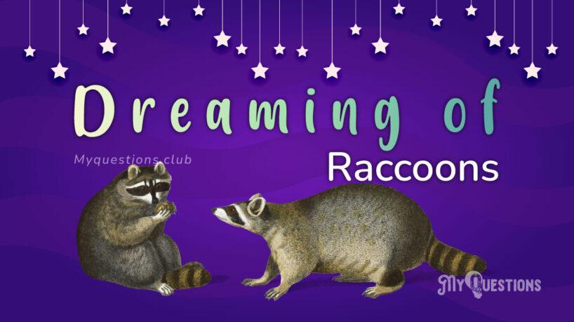 DREAMING OF RACCOONS